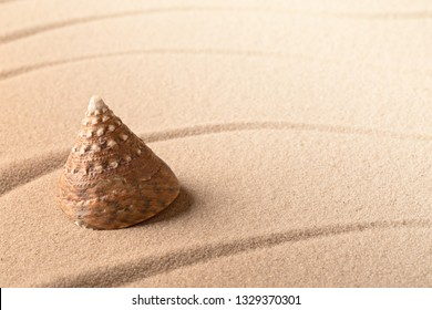 cone sea shell on sandy beach. Lines in sand and background with copy space.