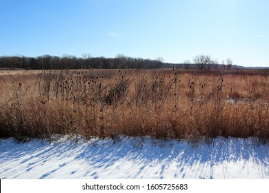 Coneflower seedpods in a prairie during winter with snow