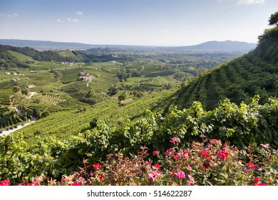 Conegliano Valdobbiadene Region, Italy, 3 Aug 2016 - Region in northern Italy famous for its wineries producing original Prosecco Sparkling White Wine