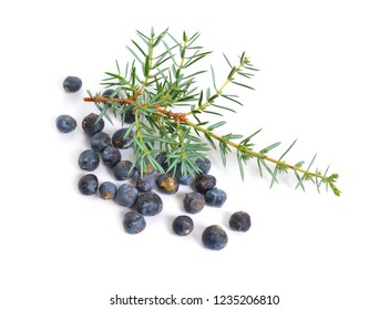 Cones and leaves of Juniperus communis isolated on white background.