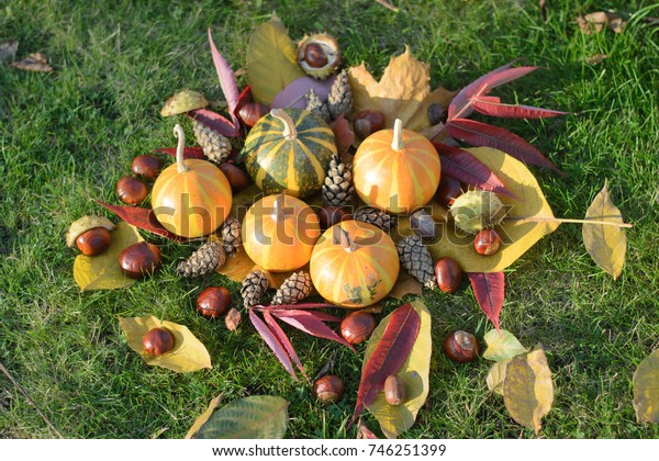 cones, pumpkins and chestnuts among fallen leaves