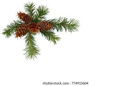 Cones and twigs pine tree (Pseudotsuga menziesii, Douglas fir, Douglas-fir, Douglas tree, Oregon pine) on a white background with space for text. Top view, flat lay. Christmas decoration.