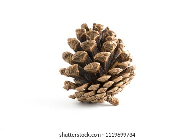 cones various coniferous trees isolated on white