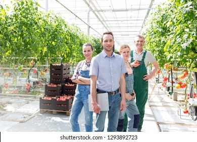 Confident farmers standing with supervisor against tomato cultivation in greenhouse