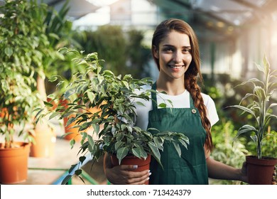 Confident gardener holding plants in pots in her own greenhouse store.
