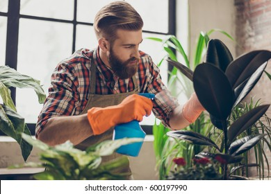 Confident handsome florist with red beard  spraying plants with water