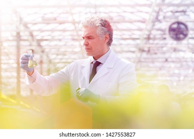 Confident mature male biochemist examining conical flask while standing in greenhouse