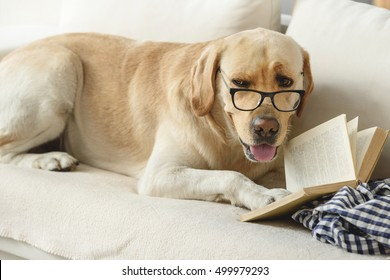 confident student puppy studying on the couch