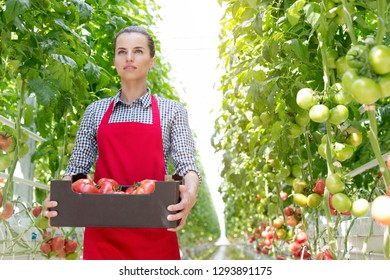 Confident woman with tomatoes in crate amidst plants at greenhouse