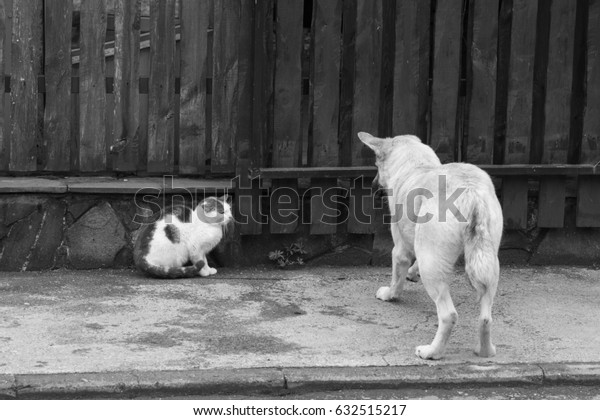 Conflict situation of cats and dogs on street - black and white
