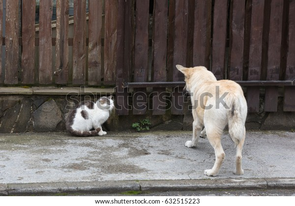 Conflict situation of cats and dogs on street