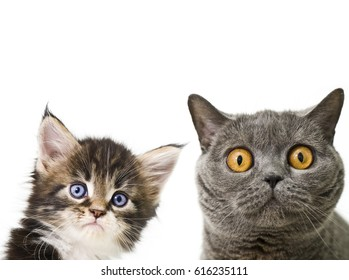 Image result for images of confused cats