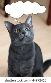 Confused Cat Images, Stock Photos & Vectors | Shutterstock