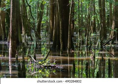 Congaree Swamp National Park in South Carolina.