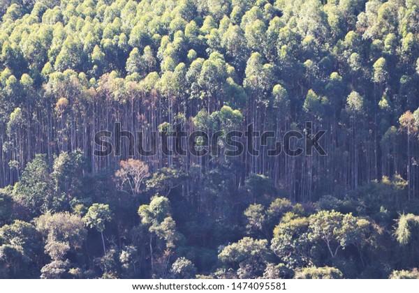Congonhal Minas Gerais fonte: image.shutterstock.com