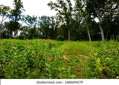 Burial Mounds Images, Stock Photos & Vectors | Shutterstock