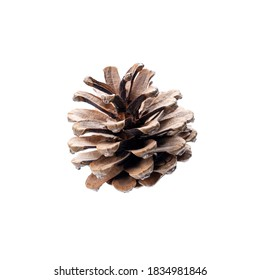 conifer cone isolated on a white background. pine cone for christmas decoration.