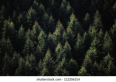 Conifer forest from above
