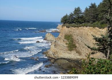Conifer forest on bluff above Cape Arago beach, Oregon coast
