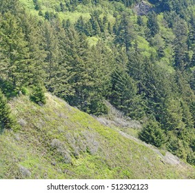 Conifer forests on coastal mountains along the Oregon coast