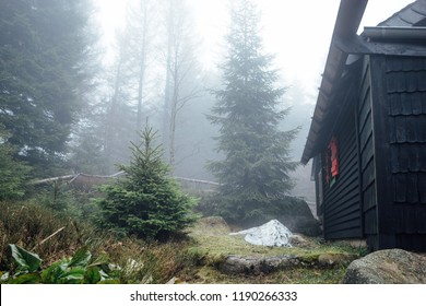 Conifer trees next to a cabin