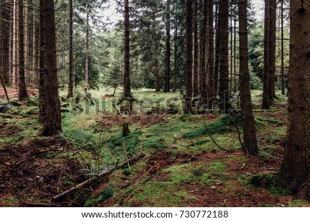 Coniferous forest and forest floor