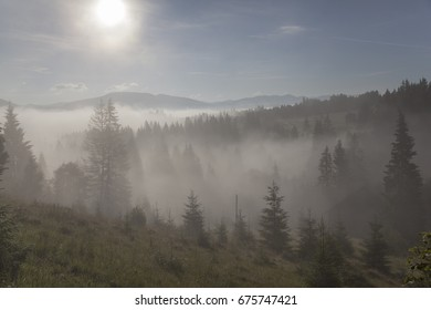 Coniferous forest in fog and morning sunlight. Dawn in the mountains.  Carpathians. Ukraine