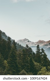 Coniferous Forest and Mountains Landscape Travel serene scenery summer wild nature