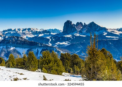 Coniferous forests at high altitude on the snowy mountains