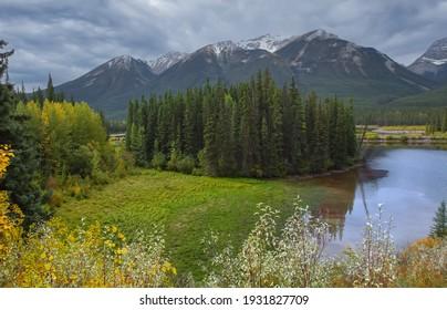 Nadelbäume am Fluss Bow im Nationalpark Banff