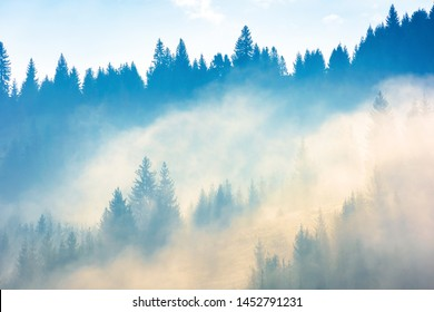 coniferous trees in the fog on the hill. amazing nature phenomenon in the chilly morning. awesome autumn background. deep atmospheric scenery in yellow and cyan tones. beautiful relaxing moment.