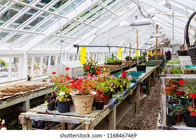 CONNEMARA, IRELAND - JULY 9, 2018: Inside commercial plastic covered horticulture greenhouse of garden center selling bedding plants. Connemara Abbey, Ireland