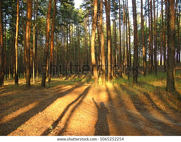 Consept Unity Nature World Forest Stock Photo (Edit Now) 1065252254