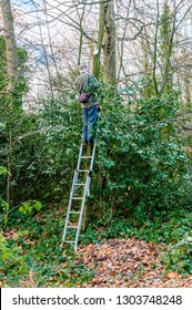 Conservation volunteers protected and improved green spaces, London, UK
