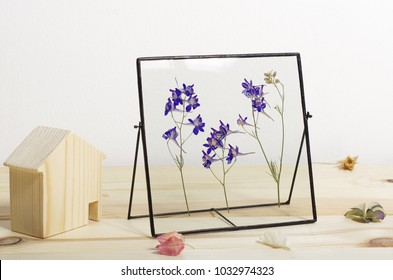 consolida wild flowers pressed in a glass frame