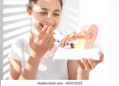 Construction ear anatomy of the ear. How is made the human ear? The girl is watching a model of the human auditory
