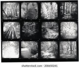 Contact sheet - scan from film, soft focus and slight grain visible at full size