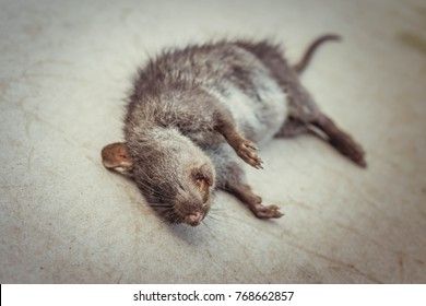 Contagion, Dead rats lying on a white background.