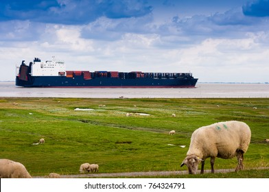 A container ship on the river Elbe is passing sheeps on a dike near Cuxhaven, Germany