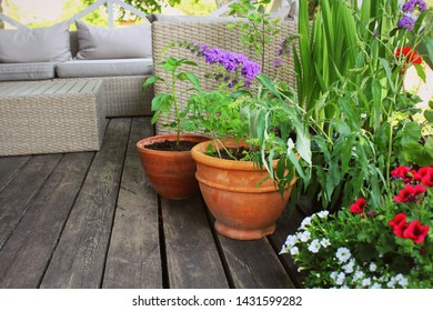 Container vegetables gardening. Vegetable garden on a terrace. Flower, tomatoes growing in container .