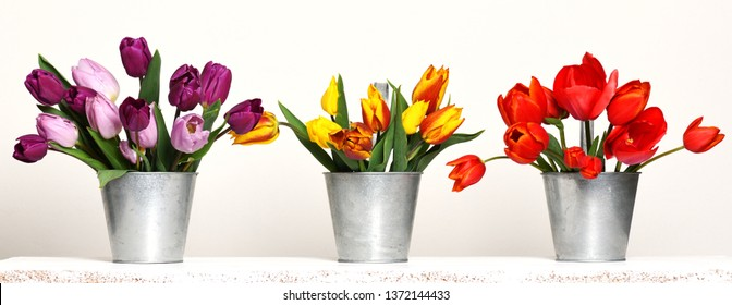 containers with beautiful colorful tulips
