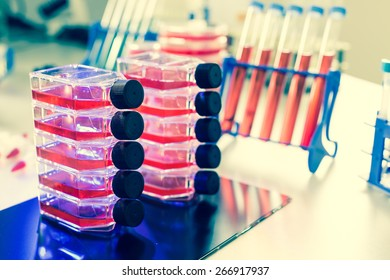 Containers of the biological culture in the laboratory