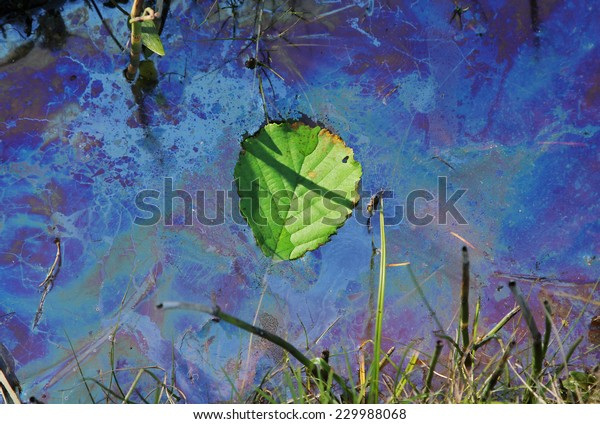 contaminated water with swimming leaf, environmental pollution