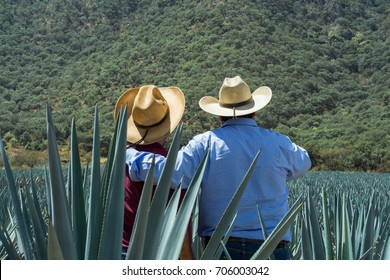 Contemplating the field of agave for the tequila.