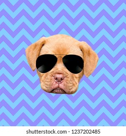 Contemporary art collage. Concept puppy wearing sunglasses on colorful geometric background.