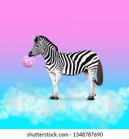 Contemporary art collage. Concept zebra chewing bubblegum.