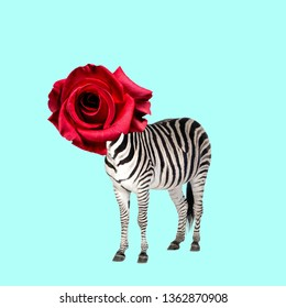 Contemporary art collage. Concept zebra with rose as a head.