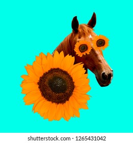 Contemporary art collage. Country horse in sunflowers. Country romantic mood
