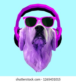 Contemporary art collage. Dog in headphones and sunglasses. Dj p
