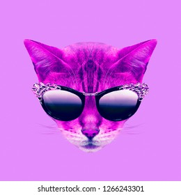 Contemporary art collage. Glamor kitty in stylish glasses